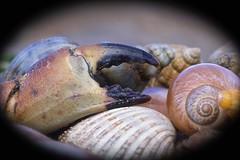 Seafood Platter   Crosby beach (stephenmulvaney) Tags: macro seaside bokeh ngc seashell tamron90mm crosbybeach 7dmk11