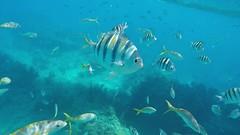 Snorkeling in Looe Key, FL - 4.30.16 (carissaconti) Tags: ocean sea fish coral keys florida tropical reef looe