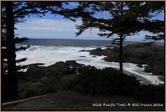 Ucluelet, BC along the trail (wjis21) Tags: baku longbeach tofino westcoast ucluelet portalberni 1250 amphitrite chestermanbeach hwy4 africabeach harbourquay lynnroad amphitritelighthouse tofinobb