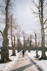 IMG_8737 (Adventurin') Tags: dog sweden stockholm aurora lapland sledding kiruna nothernlights