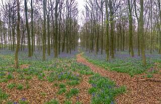 Dockey Wood starts to turn blue