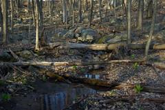 IMGP6712 Scoville new trail (shutterbroke) Tags: new pentax ct reservoir trail wolcott scoville k10d shutterbroke