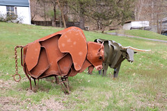 Grazin' In the Grass (jschumacher) Tags: sculpture animals upstate newyorkstate metalsculpture portjervis portjervisnewyork
