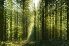 Sous bois (Valentin le luron) Tags: nature de switzerland nikon zoom vert lausanne e yves paysage 800 fort contrejour coup vaud sousbois romande paudex jorat 20160430
