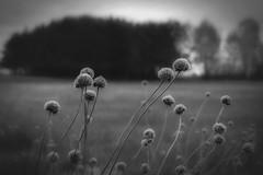 *** (pszcz9) Tags: blackandwhite bw nature monochrome closeup landscape spring sony poland polska a77 wiosna przyroda beautifulearth pejza zblienie