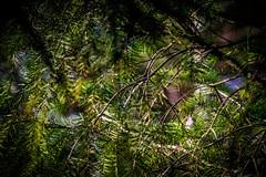 Hey, Im here! (K3romix) Tags: tree bird branches ste vogel
