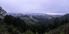 Evening rain (Derek Midgley) Tags: green rain misty valley greatoceanroad dsc02004pano