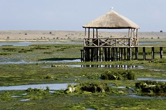 DSC01098 (hofsteej) Tags: lagune lagoon morocco maroc sultana oualidia