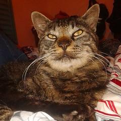 2015-08-19_1440020158 (Mama Gipsy) Tags: arte natureza artesanato gatos mama gipsy
