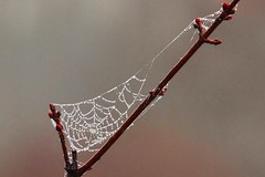 After the rain . . . (goodhike) Tags: morning lake germantown nature water rain spider md waterdrop web spiderweb maryland drop dew morningdew gunners gunnerslake