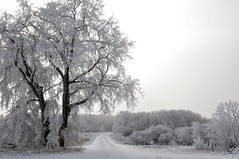 My world is..... (Jeannette Greaves) Tags: family trees snow love hoarfrost jeannette 2015 cwdblackwhite