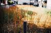 Vacant lot (yasu19_67) Tags: shadow sunlight film japan analog bokeh fujifilm osaka superia400 vacantlot expiredfilm photooftheday fujicolor filmphotography minoltaα7 filmism minoltaaf3570mmf4