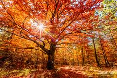 Under the tree by FredB Art (Frdric Bonnaud) Tags: tree fleur colors jaune photography photo marseille colored mont aix 6d ventoux 2015 montventoux underthetree versantsud canon6d fredbart fredericbonnaud