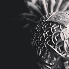 #BlackAndWhite #igblacknwhite #bnw_society #blackandwhiteisworththefight #gallery_of_bw #thephotographerwithin #minimalmood #minimal_perfection #mindtheminimal (MicahNacar) Tags: blackandwhite square willow squareformat teampilipinas instagram instagramapp uploaded:by=instagram
