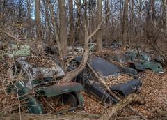 DSC08587.ARW-01 (juice95m3) Tags: abandoned rust vintagecar automobile junkyard oldcars classiccars
