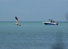 Seascape (yoelisd2003) Tags: blue sea sky pelicans birds boats botes seascapes barcos playas seabirds pelicanos birdsofflorida olympus70300 olympusem1 olympusomdem1
