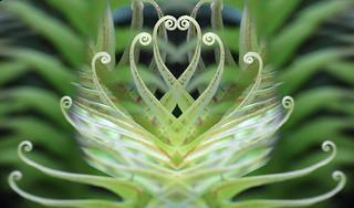 Heart of a fern