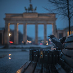 The Early Bird (*altglas*) Tags: city morning berlin bird dawn lights early stadt crow dmmerung rook brandenburgertor morgen mllmann vogel lichter krhe garbageman earlybird frhaufsteher saatkrhe selectiveconceptualdof sonya7s zuiko2070mm