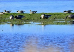 QZ 235 (cadayf) Tags: landscape duck 33 hunting marsh paysage marais canard chasse gironde appeau hautegironde
