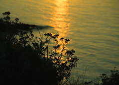 20150809-105_Silhouettes at Sunset (gary.hadden) Tags: sunset seascape landscape evening silhouettes saintmalo stmalo seedheads