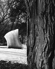 A walk in the park. (@bokehpa) Tags: park trees blackandwhite sculpture snow tree art byn mamiya blancoynegro film nature monochrome analog mediumformat kodak trix cement grain ishootfilm 55mm bark analogue analogphotography bnw mamiya645 120mm kodakfilm trix400 filmisnotdead mamiyam645 sekorlens sekor55mm