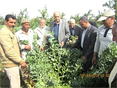 Happy Farmers_Nubaria area (ICARDA-Science for Better Livelihoods in Dry Areas) Tags: farmers northafrica climatechange mena pulses ifad nutrition resilience drylands icarda incomes westasia croprotation seedsystems conservationagriculture euifad wheatlegumecroppingsystems