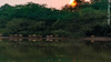 DSC_0484 (RizwanYounas) Tags: pakistan sunset reflection birds pk punjab derawar