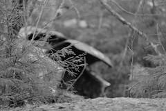 20160203089753 (koppomcolors) Tags: old cars car forest vintage sweden skog bil sverige veteran vrmland gammal bilar varmland bstns koppomcolors
