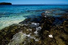 Vanuatu Shell (Natalie.Imagegallery) Tags: ocean pink blue sea brown black green beach water island rocks waves cone shell shore tropical pacificisland havanabay natalietonkingimagegallery