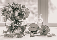 soft (Vanili11) Tags: flowers apple window glass monochrome sepia vase windowlight