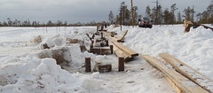 Finally, the projecting parts of the pine pillars were cut at 35 cm above the ice surface. (Yugra State University) Tags: hammer chainsaw h housework boardwalks mukhrinofieldstation mukhrinobog boardwalksrepair