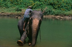 Sri-Lanka-Elephants (Mobile/WhatsApp:00919495509009) Tags: