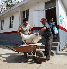 VENTA DE MAZ (diconsa_mx) Tags: tienda hidalgo huasteca maz comunitaria diconsa