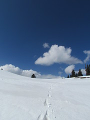 Mushkpuri- Winters (Zain's) Tags: pakistan snow mountains beauty murree nathiagali galiat mushkpuri dungagali