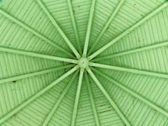 Convergences (p.franche) Tags: wood brussels green europe belgium belgique bruxelles vert panasonic dxo kiosque brussel hdr bois charpente belge fz200 pascalfranche pfranche