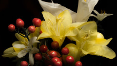 Yes, They Are Fake, But Still Fun to Shoot (Gold Element Photography) Tags: flowers red up yellow closeup still close silk fake artificial manufactured
