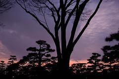 DSCF1387.jpg (nekoma15) Tags: flickr velvia  fujifilm