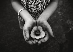 Breathe (trois petits oiseaux) Tags: flower kids dirty breathe desertrose