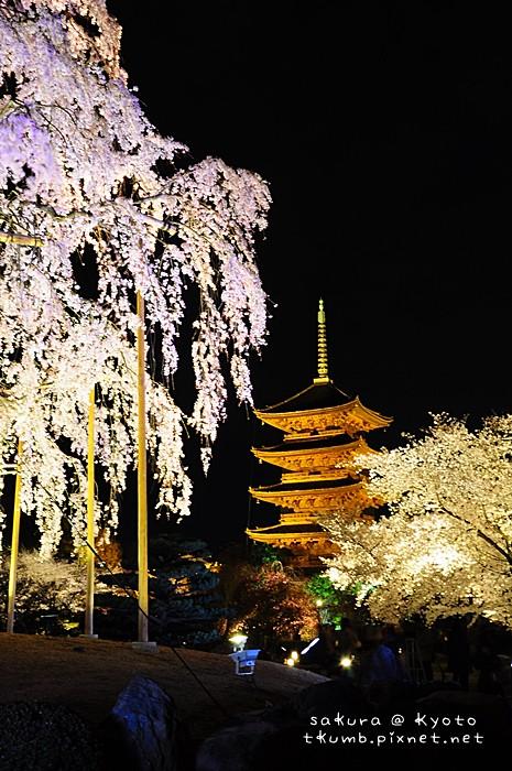 2014東寺夜櫻 (8).jpg