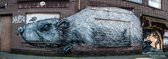 It was once the blacksmith and ........ (ericbaygon) Tags: street panorama house brick art wall rodent nikon rat paint belgium belgique belgie panoramic dessin peinture brique blacksmith drawn rue mur antwerpen graffitis doel forgeron grawing nikonpassion d300s