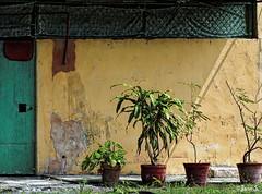 Culture en pots (Jean S..) Tags: door green yellow wall outdoor cuba sidewalk pots
