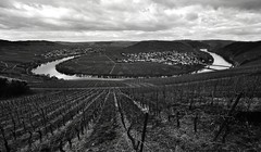 River bend   [Explore 2016-03-26] (heinrich_511) Tags: blackandwhite bw white germany nikon heart wine thoughts valley d750 hillside whitewine hl mosel riesling riverbend moselle 2814mm