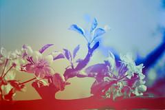blur-dreamy-texture-texturepalace-26 (texturepalace) Tags: blur color leaves cc creativecommons dreamtextures texturepalace blurtextures