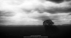 Lady Of The Sycamore (...She) Tags: light england sky blackandwhite bw sunlight mountains tree nature monochrome silhouette clouds landscape photography scenery shadows silhouettes atmosphere scene sycamore cumbria eden mothernature lonelytree lightrays edenvalley westmorland darknessandlight sycamoretree theedenvalley sheenaduckworthphotography ladyofthesycamore