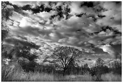 Evening Sky. (vegetus aer) Tags: mono none cambridgeshire wildlifetrust woodwaltonfen greatfen greatfenproject bcnwildlifetrust