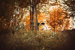(:*`*:.Diey :*`*:) Tags: nature grass nikon bycicle