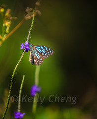 Taiwan-121113-201 (Kelly Cheng) Tags: travel color colour green tourism nature animals horizontal fauna butterfly daylight colorful asia day taiwan vivid nobody nopeople colourful traveldestinations  northeastasia