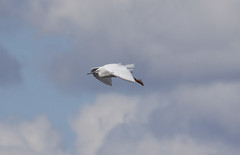 Egret (6) (Mal.Durbin Photography) Tags: nature birds newport naturereserve newportwetlands maldurbin goldcliffnewport