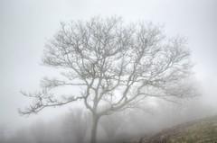 Parkway Mist (esywlkr) Tags: mist tree nature weather fog nc northcarolina bro blueridgeparkway wnc