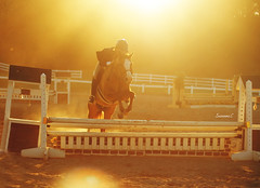 Sundown in the Pony Hunter Ring (suzcphotography) Tags: light sunset horse canon 50mm jump jumping sundown large center pony hunter equestrian equine bridgewater t3i